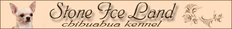 чихуахуа Stone Ice Land